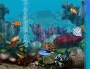 Descargar Living Marine Aquarium Salvapantallas