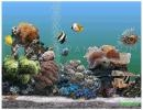 Descargar Animated 3d Aquarium